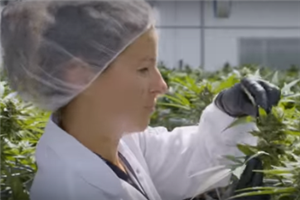 Hydropothecary in deal with Segra ahead of cannabis