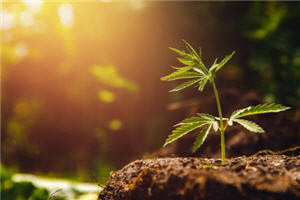"""""""My Turn is Over"""", Canopy Growth Parts Ways with CEO"""