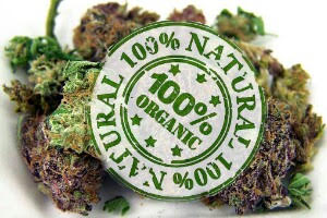 The ORGANIC Cannabis Opportunity - A Hole in the Clouds?